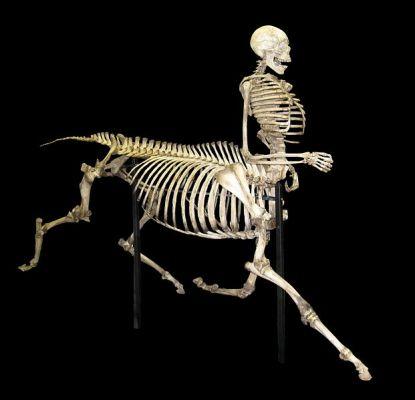 621px-Centaur_skeleton